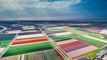 Hollandse Bollenvelden van Sebastiaan van Stam Fotografie