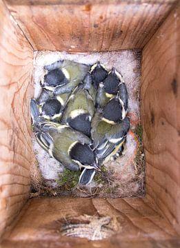 Piepjonge vogels! van Ellen Voorn