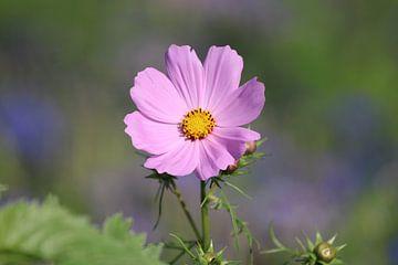 roze bloem van Mila van Pijkeren