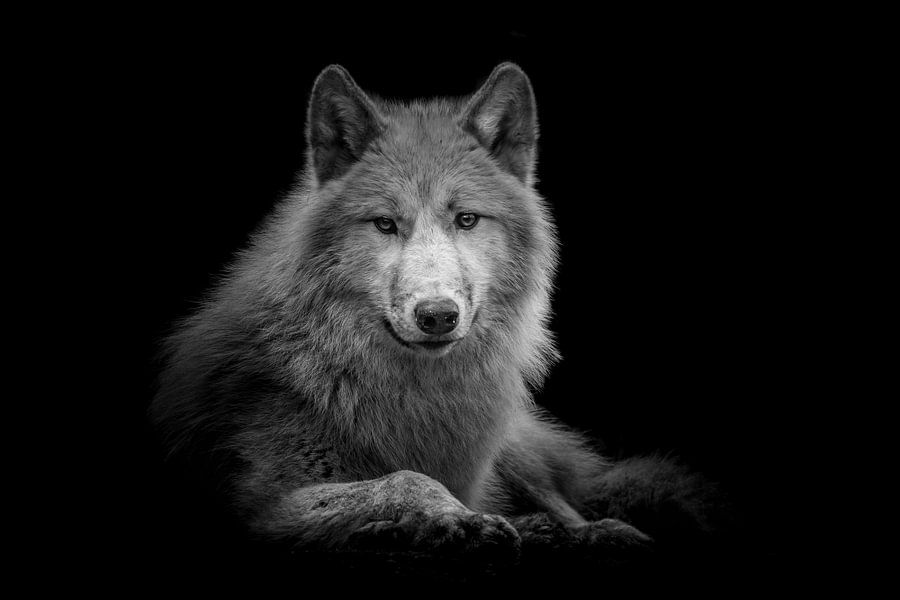 Wolf van Jessica Blokland van Diën