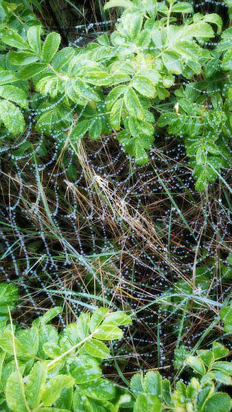 Spinnenweb met regendruppels van Chantal Koper