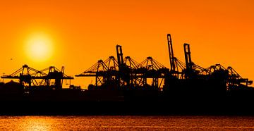 Zonsondergang in de haven van Ton van Buuren