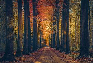 Herbst Zuneigung von Joris Pannemans - Loris Photography