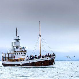 Bultrug en toeristenboot van Sam Mannaerts Natuurfotografie