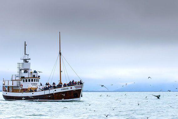 Bultrug en toeristenboot