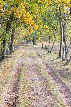 kleuren van de Herfst  van bart Verboven