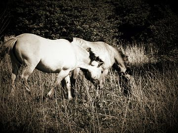 Paardjes in de lente van lindsay maka