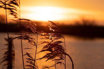 Sonnenaufgang vom Schilf fotografiert von Kuifje-fotografie