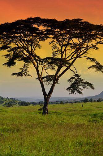 Zonsondergang Serengeti van