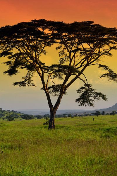 Zonsondergang Serengeti van Jorien Melsen Loos
