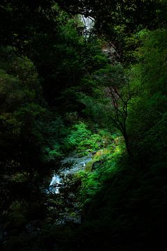 Kleiner Wasserfall im madeirensischen Dschungel von jonathan Le Blanc