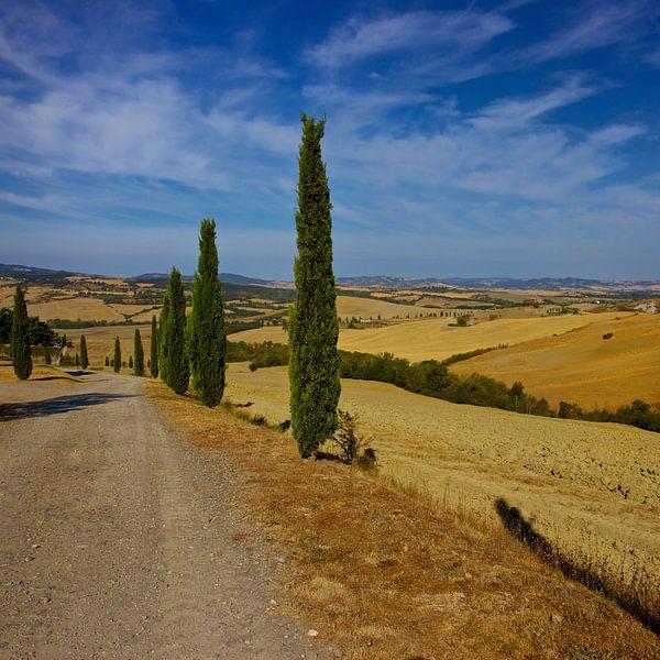 Cipressen in Toscane van Gerard Oonk