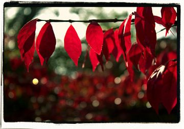 colours of autumn van Francisco de Almeida