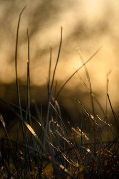 Das niedrige, späte warme Licht trifft auf das Gras von Miranda Palinckx