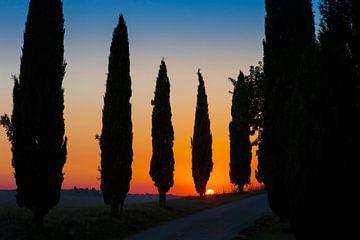 Cipressenlaan, zonsondergang. van Rens Kromhout