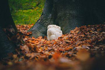 Pruikzwam tussen de bomen tussen de herfstbladeren van Fotografiecor .nl