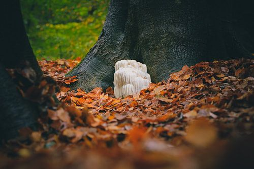 Pruikzwam tussen de bomen tussen de herfstbladeren