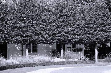 Bomen van Agnes Meijer