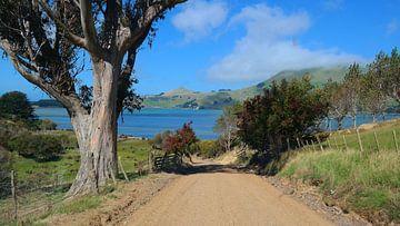 Neuseeland - die Weir Roud auf der Otago Peninsula von Gerold Dudziak