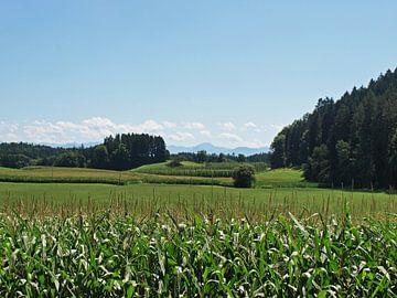 Landschap rondom de Bodensee van Rinke Velds