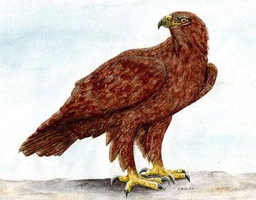 Eagle van Sandra Steinke