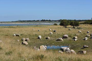 Natuurlandschap met schapen en zwerfkeien op Noord Funen (Fyns Hoved) van Tjamme Vis