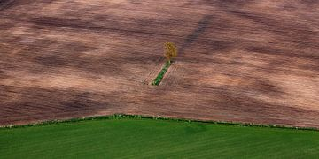 Eenzame boom von