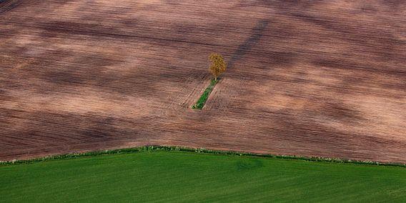 Eenzame boom van Ludo Verhoeven