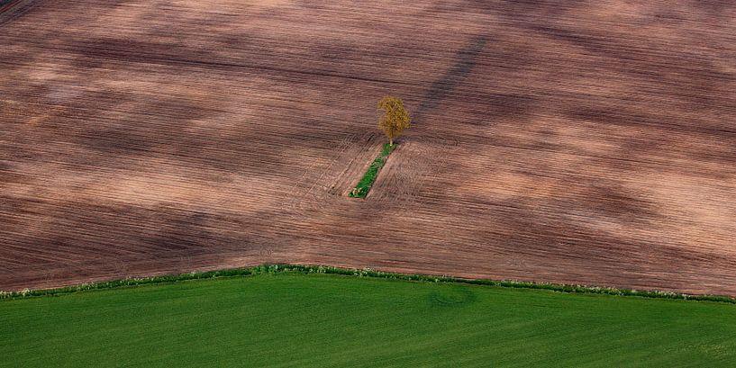 Eenzame boom von Ludo Verhoeven