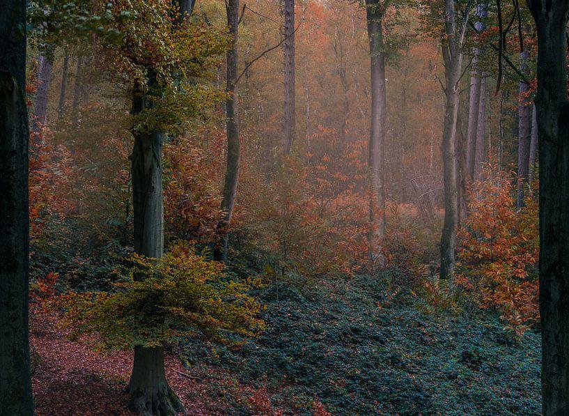 Autumn vibes van Wim van D