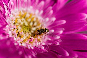 Bloemetjes en bijtjes van Marieke de Boer