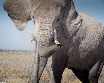 Boze olifant in Etosha, Namibië von