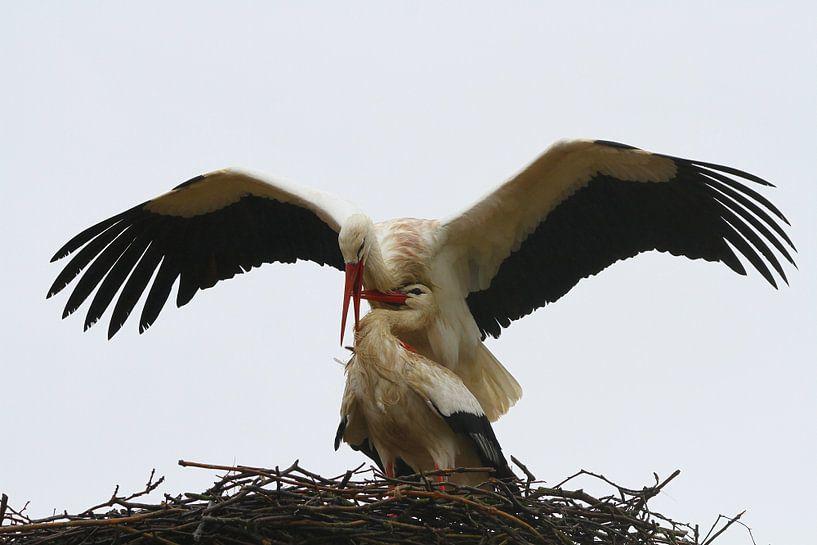 Vogel | Ooievaar van Larissa Bakker