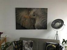 Klantfoto: Close up van een olifant van Yvonne Bekkers, op aluminium