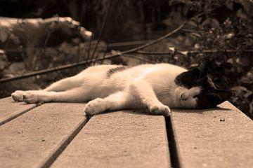 Slapende kat von Angelique van Heertum