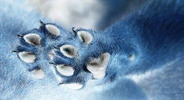 Puppy paws van Maja Smits
