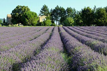 Huisje temidden van de lavendel sur Antwan Janssen