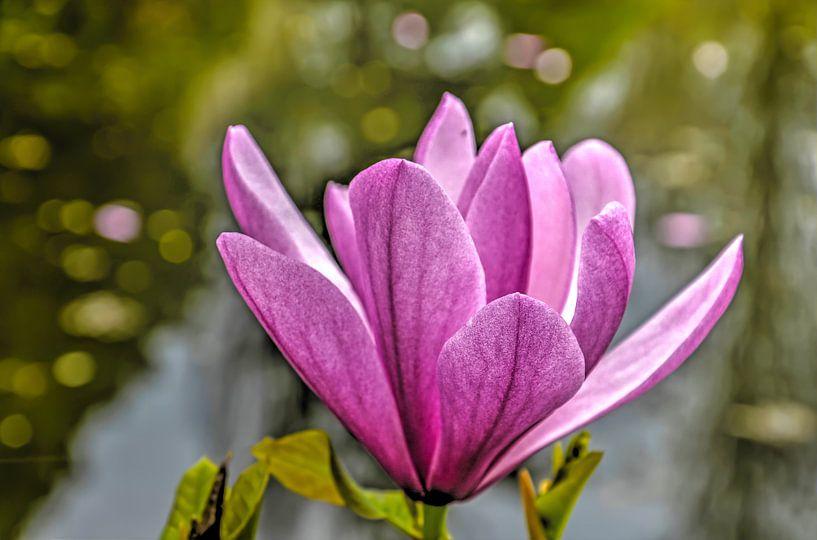Paarse magnolia van Frans Blok