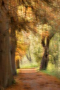 Herfst in het Park van Ingrid Van Damme fotografie