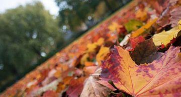 Herfst! Prachtige kleuren! van As Janson
