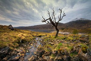 Schotland landschap dode boom van