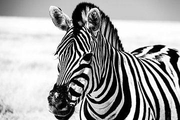 Zebra in Etosha NP van Marit van de Klok