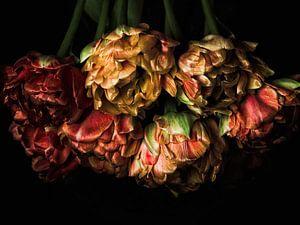 Tenturium Tulpen 1 von Henk Leijen