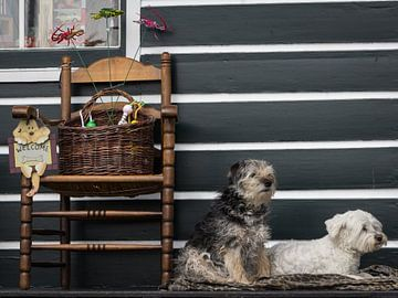 Schattige hondjes van Hilda Weges