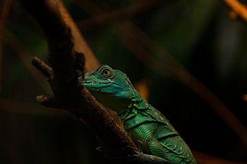Reptiel in het donker van Maarten Borsje
