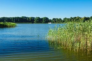 Landscape on a lake with reeds