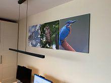 Klantfoto: Gestreepte Bosuil in Canada van Beschermingswerk voor aan uw muur, op canvas