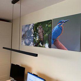 Photo de nos clients: La chouette hulotte américaine au Canada sur Beschermingswerk voor aan uw muur, sur toile