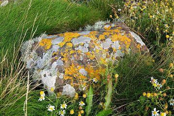 Schotland, natuursteen met mossen von Marian Klerx