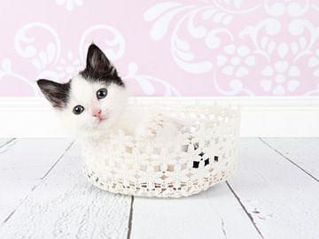 Kitten van Elles Rijsdijk